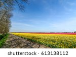 rural road at tulips field... | Shutterstock . vector #613138112