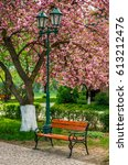 cherry blossom in city park. wooden bench and lantern under the branches of Sakura tree - stock photo