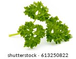 fresh parsley herb leaves... | Shutterstock . vector #613250822
