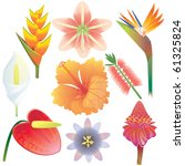 exotic tropical flowers... | Shutterstock .eps vector #61325824