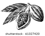 hand drawn cacao beans icon | Shutterstock .eps vector #61327420