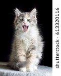 Stock photo cute cat 613320116
