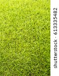 beautiful green grass... | Shutterstock . vector #613335482