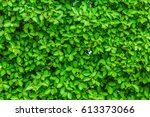 green leaf background. tiny... | Shutterstock . vector #613373066