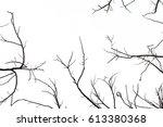 tree branch silhouette... | Shutterstock . vector #613380368