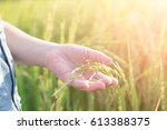 little girl in rice field | Shutterstock . vector #613388375