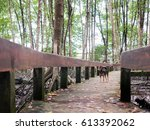 pathway to mangrove forest... | Shutterstock . vector #613392062