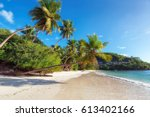 coconut palm trees on... | Shutterstock . vector #613402166