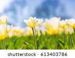 amazing summer nature flowers ... | Shutterstock . vector #613403786