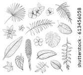vector isolated tropical leaves ... | Shutterstock .eps vector #613456058