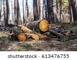 heap of tree trunk in a forest... | Shutterstock . vector #613476755