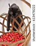 Small photo of Black cat invading the basket of acerola