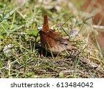 wren | Shutterstock . vector #613484042