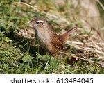 wren | Shutterstock . vector #613484045