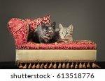 cute kittens   Shutterstock . vector #613518776