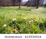 spring flower in forest | Shutterstock . vector #613534316