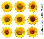 sunflowers collection on the... | Shutterstock . vector #613574666