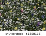 Garden With Anemone Blanda ...