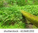 Old Moss Grown Fallen Tree...