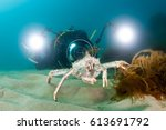 King Crab On The Seabed And...