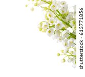 lilies of the valley  isolated... | Shutterstock . vector #613771856