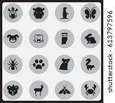 set of 16 editable zoology... | Shutterstock . vector #613797596