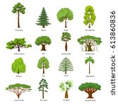 Flat Green Trees Vector...