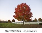 Red Tree In Field With White...