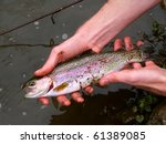 Rainbow Trout (Oncorhynchus mykiss) caught at Apple River Canyon State Park in Illinois