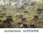 tree stumps in a clear cut... | Shutterstock . vector #613926908