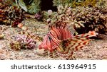 big lionfish in the red sea.... | Shutterstock . vector #613964915