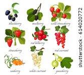 black blackberry and mulberry ... | Shutterstock .eps vector #614020772