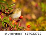 Cute bird and spring nature....