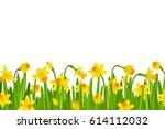 narcissus border  | Shutterstock . vector #614112032