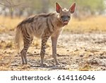 striped hyena  | Shutterstock . vector #614116046