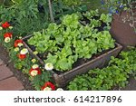 Vegetables An Enclosed Bed Of ...