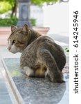 stray cat | Shutterstock . vector #614245946