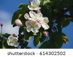 branch with blossoms against... | Shutterstock . vector #614302502