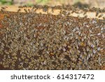 hardworking bees on honeycomb... | Shutterstock . vector #614317472