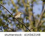 chiffchaff in tree | Shutterstock . vector #614362148