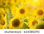 sunflower | Shutterstock . vector #614380292