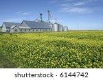 Farm Buildings Near Canola...