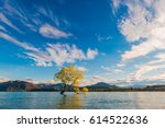 Wanaka Tree  Lake Wanaka At...