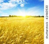 Field Of Yellow Grass Blue Sky...