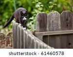 Cat Is Walking On A Fence....