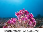Colorful Corals And Tropical...