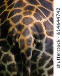 Giraffe's Butt  Rear End Motiv...