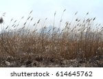 cleaning the fields of the... | Shutterstock . vector #614645762