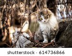 Stock photo cute cat 614736866