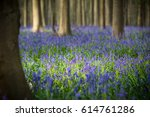 Bluebell Spring Wild Flowers A...